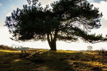 Een boom die uitstraalt van licht. van Bram van Egmond
