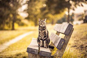Kat Op De Bank van