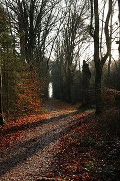 Sonnige Buchenallee im Wald von Pim van der Horst