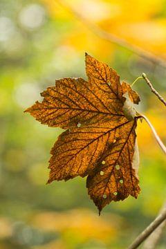 Een blik op de herfst van Birgitte Bergman