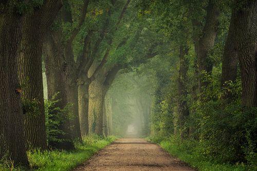 Way to Autumn