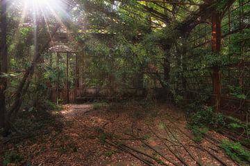 The Greenhouse 2 van Kirsten Scholten