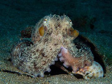 Oktopus, Lanzarote von René Weterings