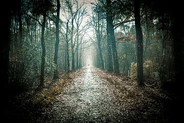 Regen en zonneschijn op een bospad van Marcel Bakker