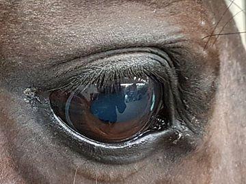 paarden oog von Joelle van Buren