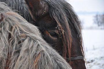 Pferde/Pferde von Henk de Boer