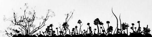 silhouet van vetplanten van