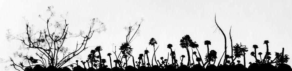 silhouet van vetplanten