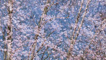 lentebloesem van Ria Bloemendaal