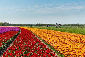 Tulpenveld in Noord-Holland von Keesnan Dogger Fotografie