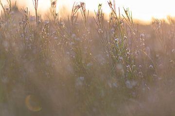 Wildblumen in der Sonne von Tania Perneel