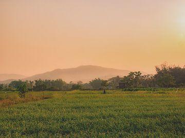 Reisfelder in Vietnam, Asien von Danny Vermeulen