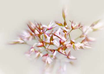 Blooming Grass van Caroline Lichthart