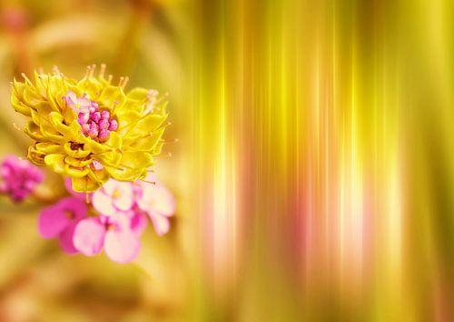 Gele Bloem van INA FineArt