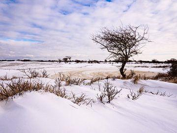 Winter in De Zilk,  Noord-Holland van Dirk van der Plas