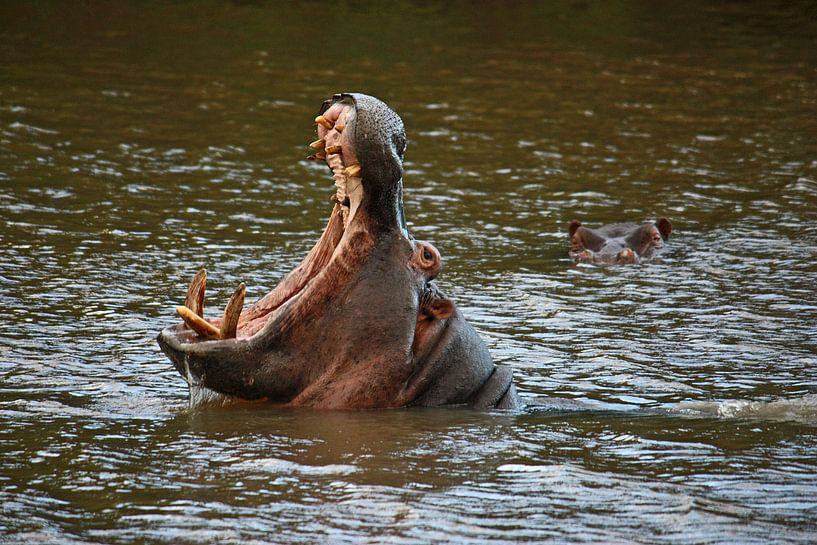 southafrica ... where's the next dentist, please? van Meleah Fotografie