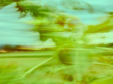 Sonnenblumen im Wind 9 van Andreas Gerhardt