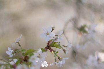 Liefde in de natuur? van As Janson