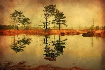 Kalmthoutse Heide von Lars van de Goor