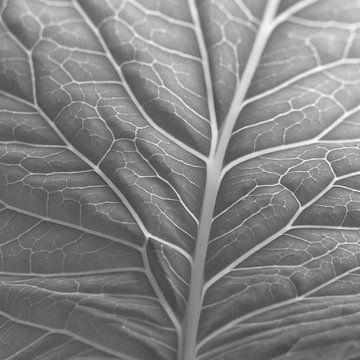 leaf von erik boer