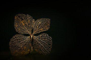 Schwarz und Gold von Caroline van der Vecht