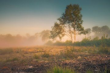 Birke im Nebel von Freddy Hoevers