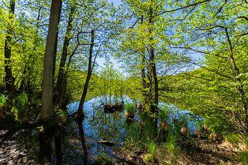 Herthasee im Jasmunder Nationalpark, Insel Rügen