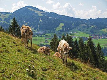 Kühe auf der Alm von Rinke Velds
