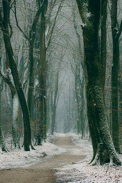 Fußweg durch einen Buchenwald während eines nebeligen Wintermorgens von Sjoerd van der Wal