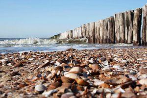 Strand van Cees van Valen