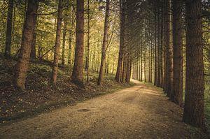De wachters van het bos