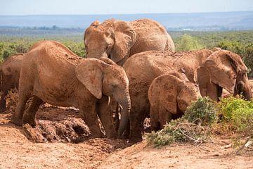 Een kleine kudde olifanten in de modder van Jack Koning