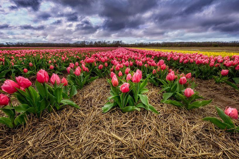 Hollands tulpen landschap van Dennisart Fotografie
