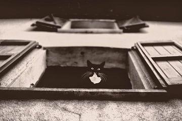 Dali die Katze von Lars van de Goor