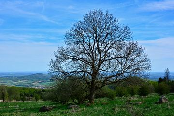 Großer Baum von Claudia Evans