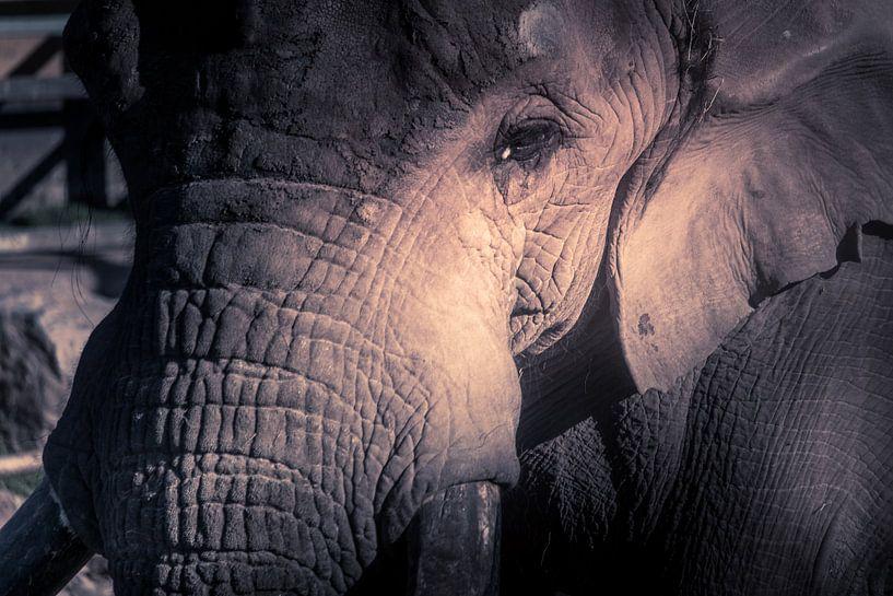 Close up van het hoofd van een olifant van Kim Bellen