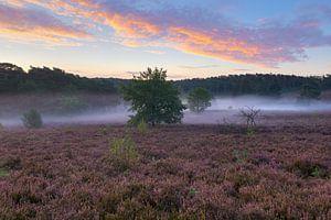 heidelandschap in Limburg