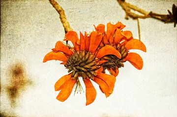 Oranje bloem van Eric van den Berg