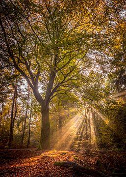zonnestralen in de herfst van Erik Keuker