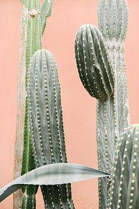 Cactussen tegen koraal roze muur III | Cactus | Botanische foto van Mirjam Broekhof