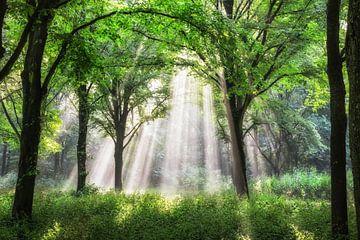 Sonnenstrahlen Amsterdam Wald von Lars van de Goor