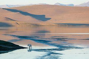 Tsaagan Nuur Lake