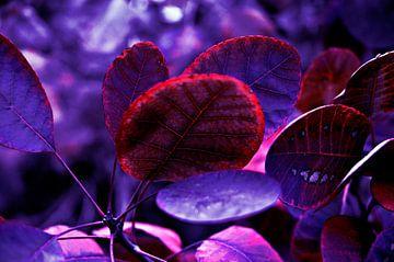 Blutende Violette Herbstblätter - Pantone Violet EC von Silva Wischeropp
