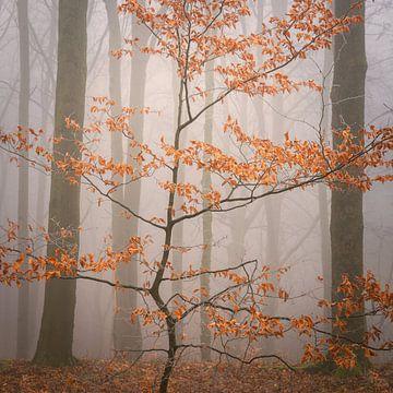 Letzte Blätter von Tobias Luxberg