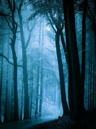 Naar het licht - blauw