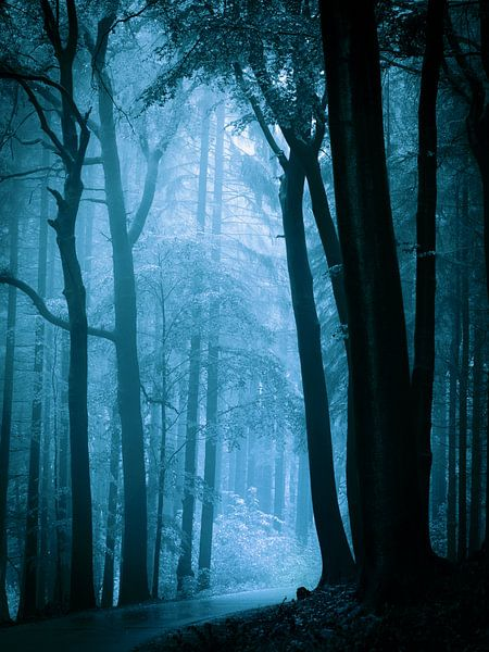 Naar het licht - blauw van Mark Scheper