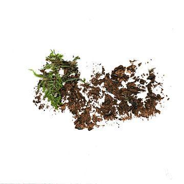 Baumlandschaft 5 von