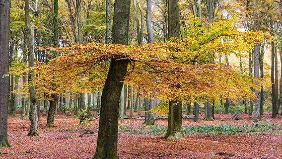 Bos in herfstkleuren van Hilda Weges