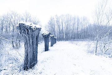 Geknotte wilgen in de sneeuw von Fotografie Jeronimo