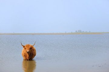 Schottischer Hochlandbewohner bei Tiengemeten von Ivonne Wierink